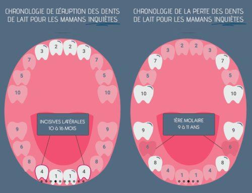 Éruption et perte des dents de lait